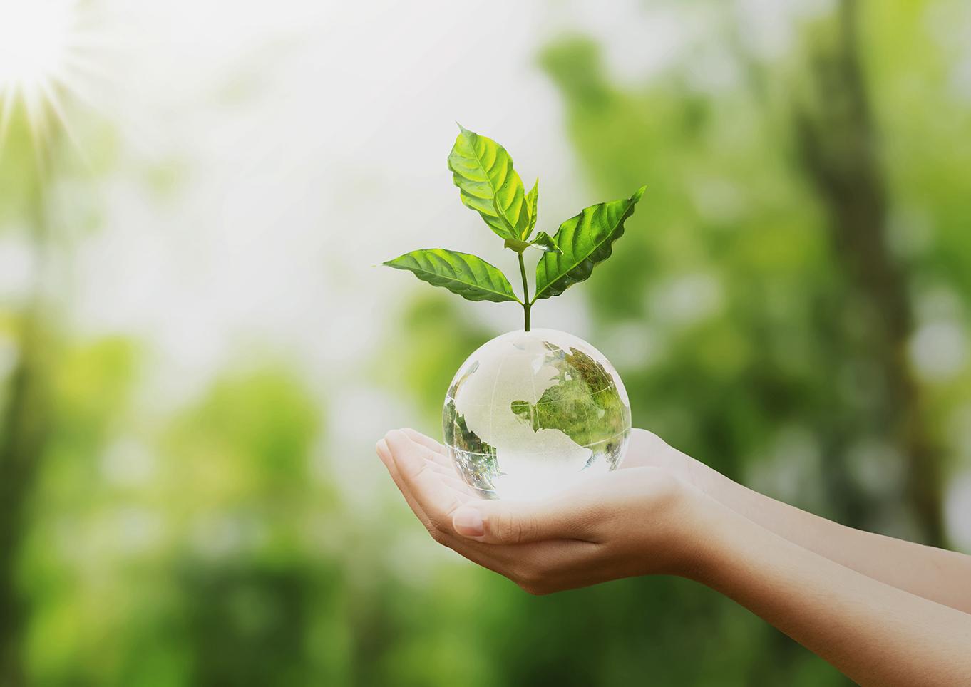 Ecoetiquetas: Hoy no son una opción, son una obligación